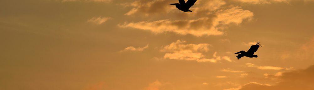 uccelli aforismo confucio